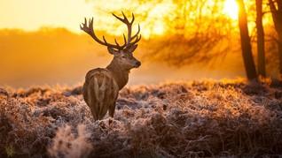 6 Rekomendasi Kegiatan Wisata Selama Musim Gugur di Inggris