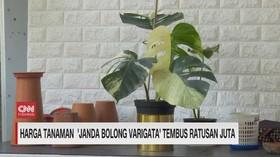 VIDEO: Demam Janda Bolong