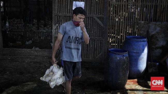 Pandemi virus corona berimbas pada turunnya permintaan unggas, termasuk ayam potong.