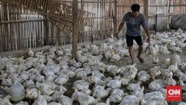 Harga Ayam 'Kemurahan', Peternak Demo Lagi di Kantor Kementan
