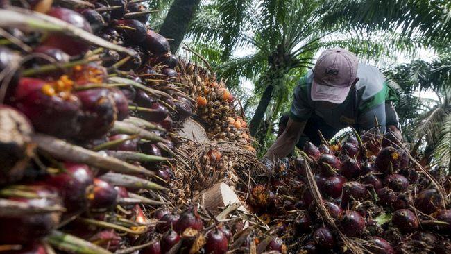 Menteri Perdagangan M Lutfi memprediksi harga minyak sawit mentah atau crude palm oil (CPO) tetap tinggi hingga Juni 2021.