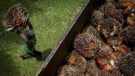 Sri Mulyani Ubah Batas Tarif Pungutan Ekspor Produk Sawit