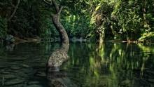 Merasakan Keajaiban Hutan Hujan Tropis di Tangkahan