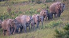 Wisata di Taman Nasional Thailand Dapat Suvenir Sampah