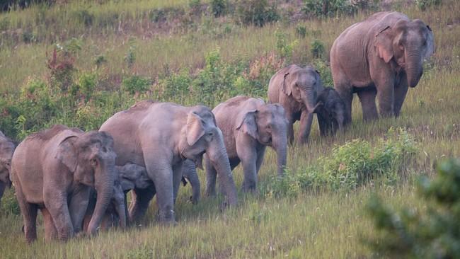 >Wisata di Taman Nasional Thailand Dapat Suvenir Sampah