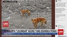 VIDEO: Kembalinya 'Lolongan' Anjing yang Disangka Punah