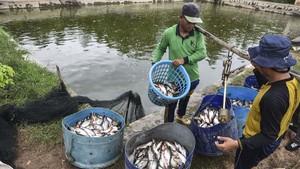 FOTO: Melawat Kampung Patin di Riau