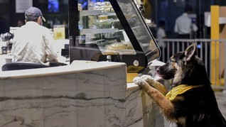 FOTO: The Barking Lot, Kafe Anjing Pertama di Arab Saudi