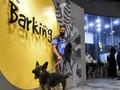 Kafe Anjing di Arab Saudi Buka Cabang Baru di Riyadh