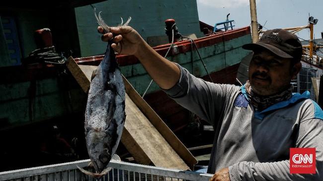 Para nelayan masih aktif menangkap ikan di tengah pandemi corona. Sayangnya, pembelian mulai lesu, terutama ekspor hasil laut.