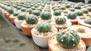 8 Jenis Kaktus Mini Cocok untuk Dekorasi Ruangan