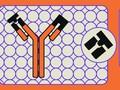 INFOGRAFIS: Beda Rapid Tes Antibodi vs Antigen