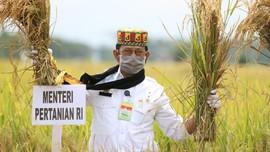 Mentan Ikuti Panen Padi di Aceh Besar