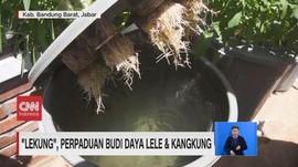VIDEO: Lekung, Perpaduan Budi Daya Lele & Kangkung