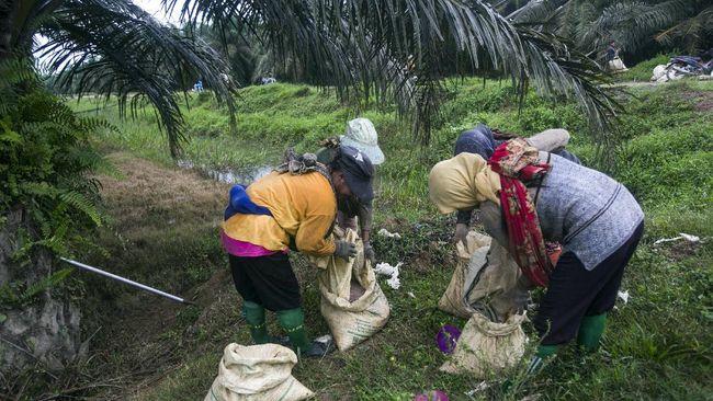 Kemenaker menyebut industri kelapa sawit berkontribusi menciptakan 16 juta lapangan kerja, karenanya pemerintah memberikan iklim investasi yang kondusif.