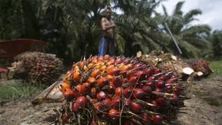 FOTO: Melihat Cerita Eksploitasi Pekerja Kelapa Sawit