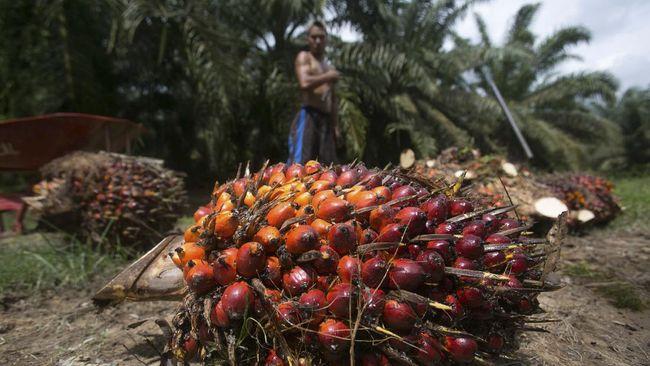 Sri Lanka melarang impor sawit dari beberapa negara termasuk Indonesia. Mereka juga meminta negara produsen sawit mencabut izin kebun yang ada.