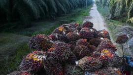 Volume Ekspor Produk Sawit  Turun 9,09 Persen Pada 2020