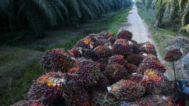 Menlu Minta Sri Lanka Buka Lagi Pintu Ekspor Sawit RI