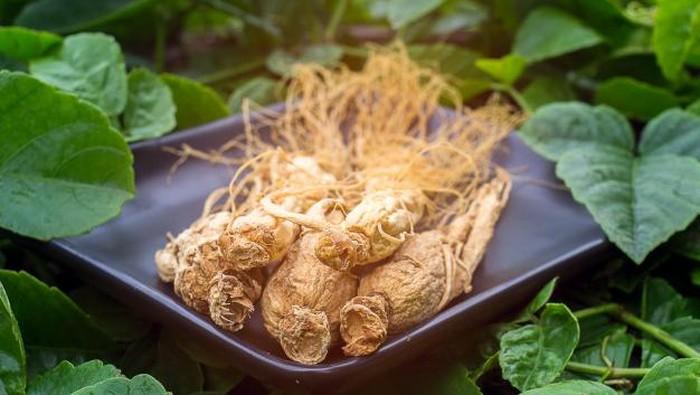Perlu Diketahui, Inilah Manfaat Penting Ginseng Korea Bagi Kesehatan