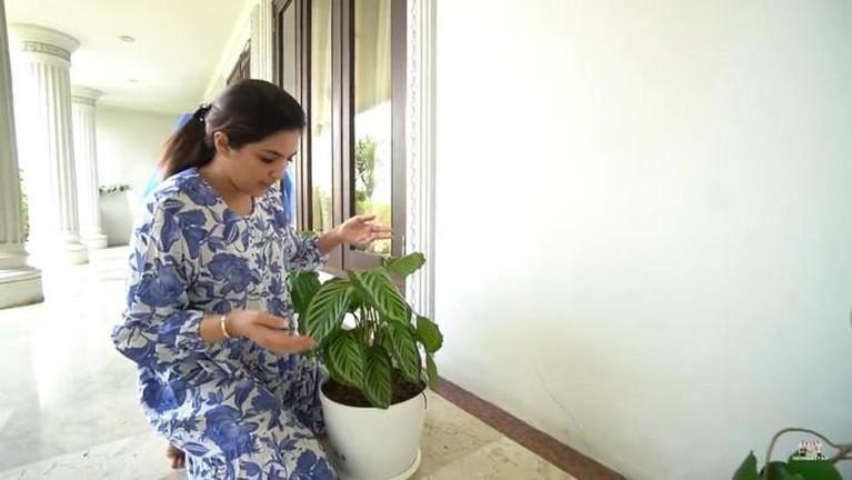 Seleb koleksi tanaman hias