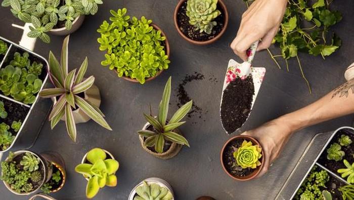 Yuk Mulai! Inilah Cara Untuk Membuat Kebun Tanaman Bahan Dapur di Rumah!