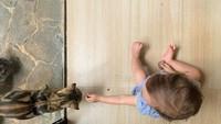 <p>Wah Zalina ternyata suka main juga sama kucing nih. Mau kasih makan apa ya kira-kira?</p>