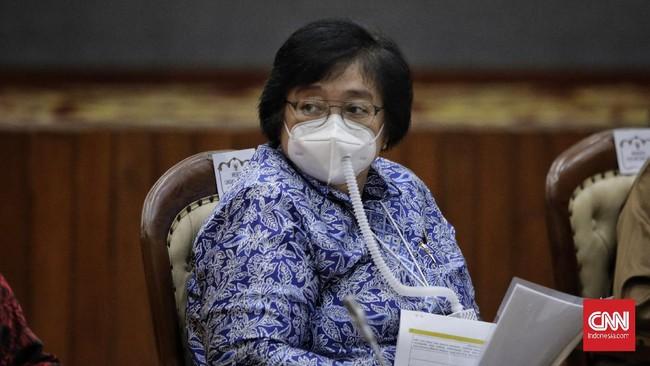 Pemerintah Rehabilitasi Hutan Skala Besar Tahun Depan