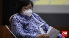 Greenpeace Kritik Menteri LHK soal Konsesi Sawit di Papua