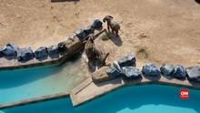 VIDEO: Tempat Pembuangan Sampah yang Jadi Kebun Binatang
