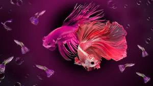 Terpana Pesona Ikan 'Berwarna'