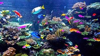 Jenis Ikan Hias Air Laut yang Agresif dan Suka Menyendiri