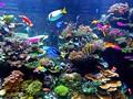 5 Pilihan Ikan Hias Air Laut yang Mudah Dipelihara