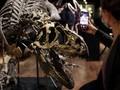 FOTO: Fosil Allosaurus Dilelang di Paris, Ditaksir Rp20 M