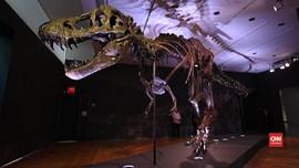 VIDEO: Rangka T-Rex Terjual Rp467 miliar