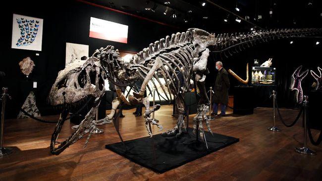 Fosil dinosaurus jenis Allosaurus berhasil dilelang dan laku hingga Rp42 miliar.