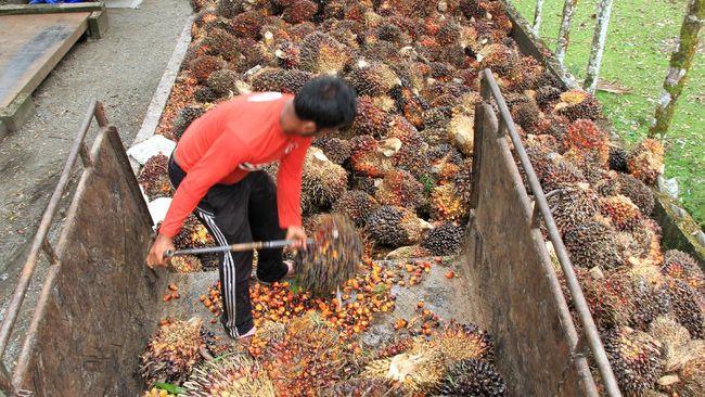 Inisiatif SMILE ini bertujuan untuk memberdayakan petani kelapa sawit dalam menciptakan mata pencaharian yang lebih baik melalui sertifikasi RSPO.