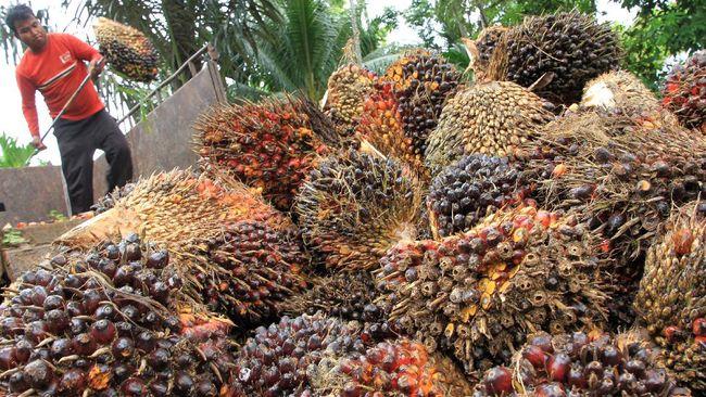 Setelah drama panjang, komoditas kelapa sawit Indonesia akhirnya boleh masuk dan dijual di Swiss.