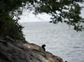 Corona, Kucing di Pulau Furtada Dikhawatirkan Jadi Kanibal