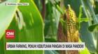 VIDEO: Urban Farming, Penuhi Kebutuhan Pangan di Masa Pandemi
