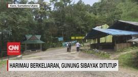 VIDEO: Harimau Berkeliaran, Gunung Sibayak Ditutup