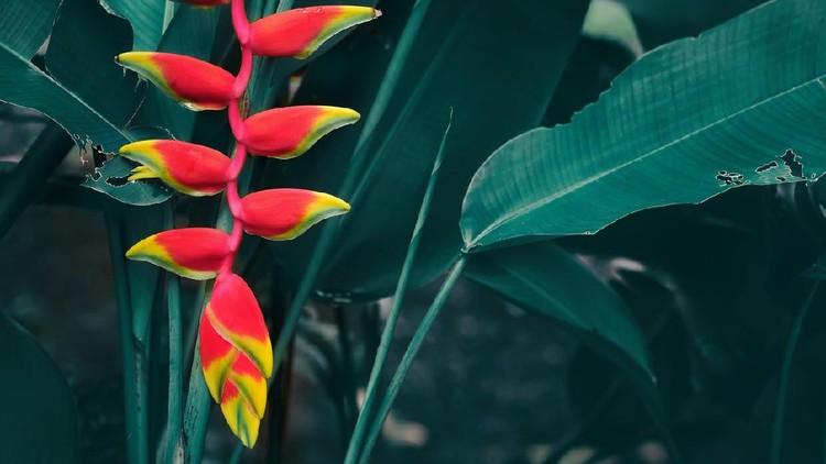 red flower on rainforest