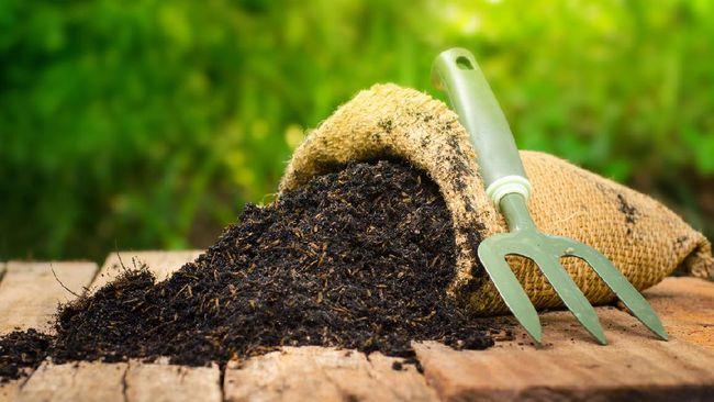 Untuk mendapatkan hasil terbaik, ketahui jenis pupuk yang cocok untuk tanaman hias karena tiap-tiap tanaman memiliki kebutuhan pupuk yang berbeda.