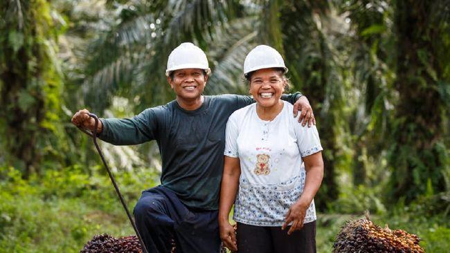 Senior Manager Global RSPO mengatakan pihaknya terus mengupayakan kesejahteraan pekerja industri kelapa sawit dengan mengatur standar perlindungan.