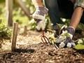 9 Peralatan Kebun di Rumah yang Wajib Punya