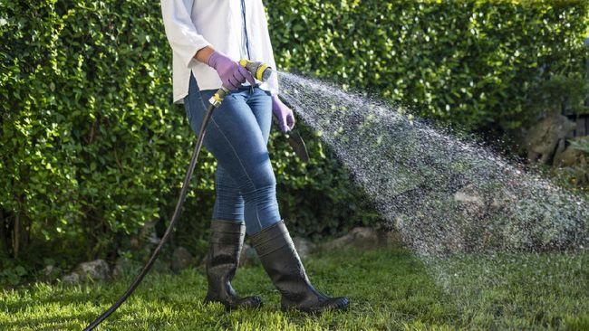 Pergi berlibur selama berhari-hari berarti juga meninggalkan pekerjaan rumah, seperti merawat tanaman hias kesayangan.