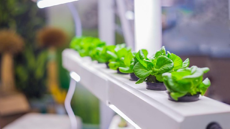 Green plants growing in pots at laboratory. Hydroponic gardening system, botanic and science concept