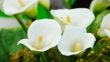 Kawasan di Australia Barat Dikepung Bunga Cantik Beracun