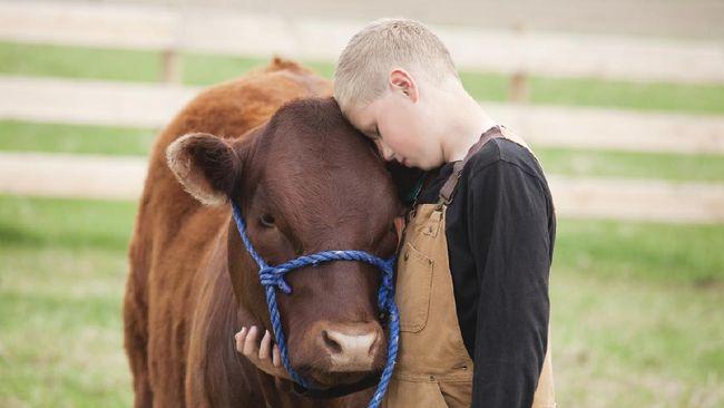 Berpelukan dengan sapi tengah menjadi tren yang digemari banyak orang di berbagai penjuru dunia. Memeluk sapi diklaim dapat meredakan stres.