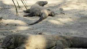 Alasan Wanita Haid Tak Boleh ke Pulau Komodo